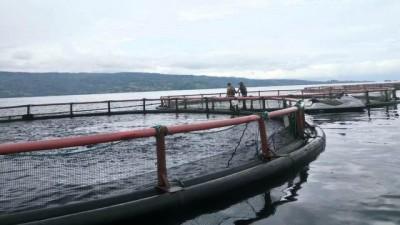 Air Danau Toba Tercemar Akibat KJA, ILAJ : Tutup PT JAPFA