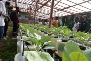 Mahasiswa Gotong Royong Cegah Pandemi Hingga Ciptakan Ketahanan Pangan Keluarga